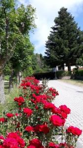 parheggio fiorito